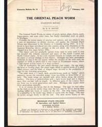 The Oriental Peach Worm, Document E75 by R. H. Pettit