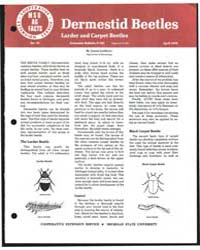 Dermistid Beetles, Document E762 by James Liebherr