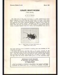 Grape Root-worm, Document E80 by R. H. Pettit
