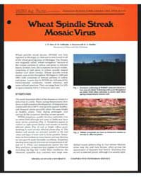 Wheat Spindle Streak Mosaic, Document E8... by L. P. Hart