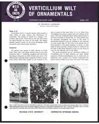 Verticillium Wilt of Ornamentals, Bullet... by Michigan State University