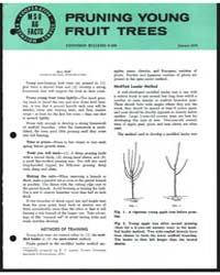 Pruning Young Fruit Trees, Bulletin E-85... by Michigan State University