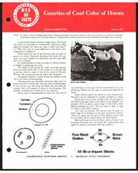 Genetics of Cost Color of Horses, Docume... by Richard Dunn