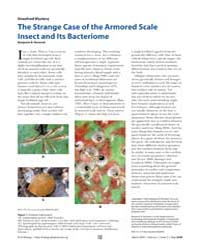 Plos Biology : the Strange Case of the A... by Normark, Benjamin B.