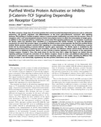 Plos Biology : Purified Wnt5A Protein Ac... by Arias, Alfonso Martinez