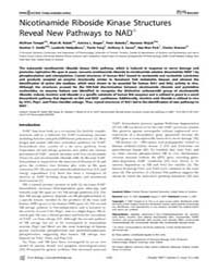 Plos Biology : Nicotinamide Riboside Kin... by Khosla, Chaitan