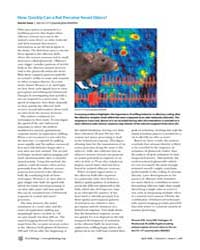 Plos Biology : How Quickly Can a Rat Per... by Jones, Rachel