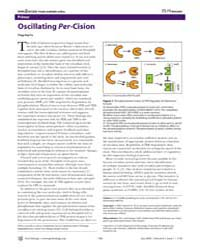 Plos Biology : Oscillating Per-cision, V... by Fu, Ying-hui