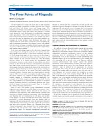 Plos Biology : the Finer Points of Filop... by Lundquist, Erik A.