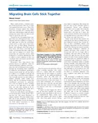 Plos Biology : Migrating Brain Cells Sti... by Inman, Mason