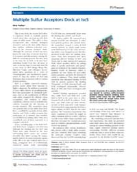 Plos Biology : Multiple Sulfur Acceptors... by Heller, Kira