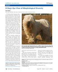 Plos Biology : a Dog's Eye View of Morph... by Gross, Liza