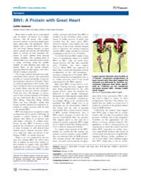 Plos Biology : Bin1 ; a Protein with Gre... by Sedwick, Caitlin
