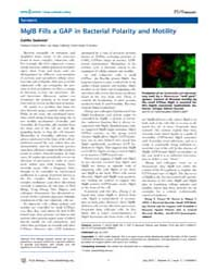 Plos Biology : Mglb Fills a Gap in Bacte... by Sedwick, Caitlin