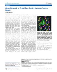 Plos Biology : Gene Network in Fruit Fli... by Public Library of Science (Plos)