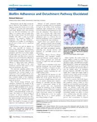 Plos Biology : Biofilm Adherence and Det... by Public Library of Science (Plos)