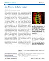 Plos Biology : Isnpn-1Primeslimbsformoti... by Public Library of Science (Plos)