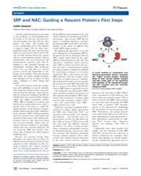 Plos Biology : Srp and Nac ; Guiding a N... by Public Library of Science (Plos)