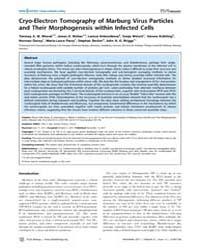 Plos Biology : Cryo-electron Tomography ... by Rey, Fe´ Lix A.