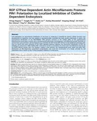 Plos Biology : Rop Gtpase-dependent Acti... by Estelle, Mark