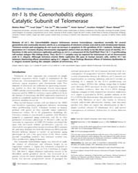 Plos Genetics : Trt-1 is the Caenorhabdi... by Kim, Stuart