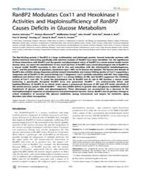 Plos Genetics : Ranbp2 Modulates Cox11 a... by Valle, David