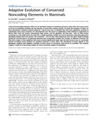 Plos Genetics : Adaptive Evolution of Co... by Dermitzakis, Emmanouil T.