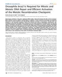 Plos Genetics : Drosophila Brca2 is Requ... by Hawley, R. Scott