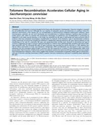Plos Genetics : Telomere Recombination A... by Biggins, Sue