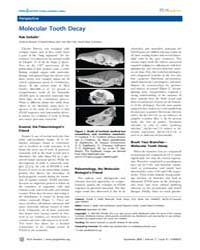 Plos Genetics : Molecular Tooth Decay, V... by Malik, Harmit S.