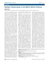 Plos Genetics : Epistatic Relationships ... by Lichten, Michael