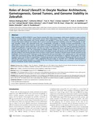 Plos Genetics : Roles of Brca2 Fancd1 in... by Mullins, Mary C.