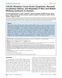 Plos Genetics : Col4A1 Mutations Cause O... by Spinner, Nancy B.