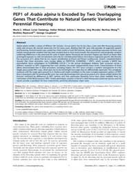 Plos Genetics : Pep1 of Arabis Alpina is... by Yu, Hao