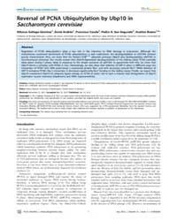 Plos Genetics : Reversal of Pcna Ubiquit... by Maizels, Nancy