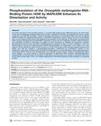 Plos Genetics : Phosphorylation of the D... by Perrimon, Norbert