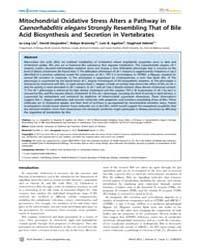 Plos Genetics : Mitochondrial Oxidative ... by Ashrafi, Kaveh