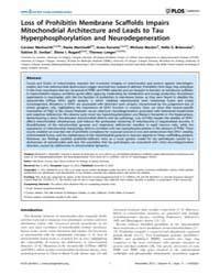 Plos Genetics : Loss of Prohibitin Membr... by Larsson, Nils-göran