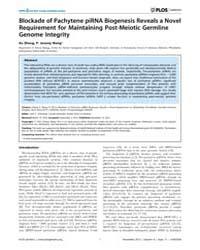 Plos Genetics : Blockade of Pachytene Pi... by Schimenti, John C.
