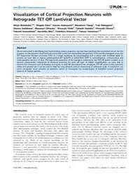 Plos One : Visualization of Cortical Pro... by Bene, Filippo, Del