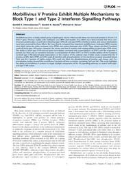 Plos One : Morbillivirus V Proteins Exhi... by Subbiah, Elankumaran
