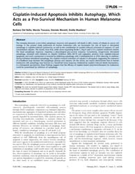 Plos One : Cisplatin-induced Apoptosis I... by Lebedeva, Irina V.