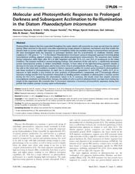Plos One : Molecular and Photosynthetic ... by Subramanyam, Rajagopal