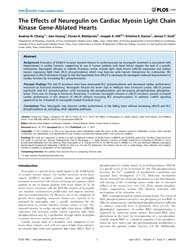 Plos One : the Effects of Neuregulin on ... by Rota, Marcello