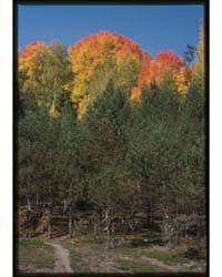 Brumfield Photographs : Sacred Grove, Ma... by Brumfield, William Craft