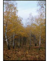 Brumfield Photographs : Fall Landscape, ... by Brumfield, William Craft