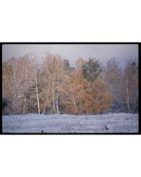 Brumfield Photographs : Birch Grove, Aft... by Brumfield, William Craft