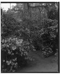 Magnolia Gardens, Charleston Vic., Charl... by Johnston, Frances Benjamin