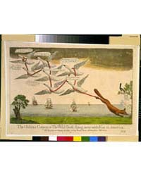 British Cartoon Prints : the Habeas Corp... by Library of Congress