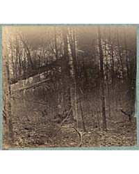 Views in the Woods Between Palmers and S... by Brown, G. O.